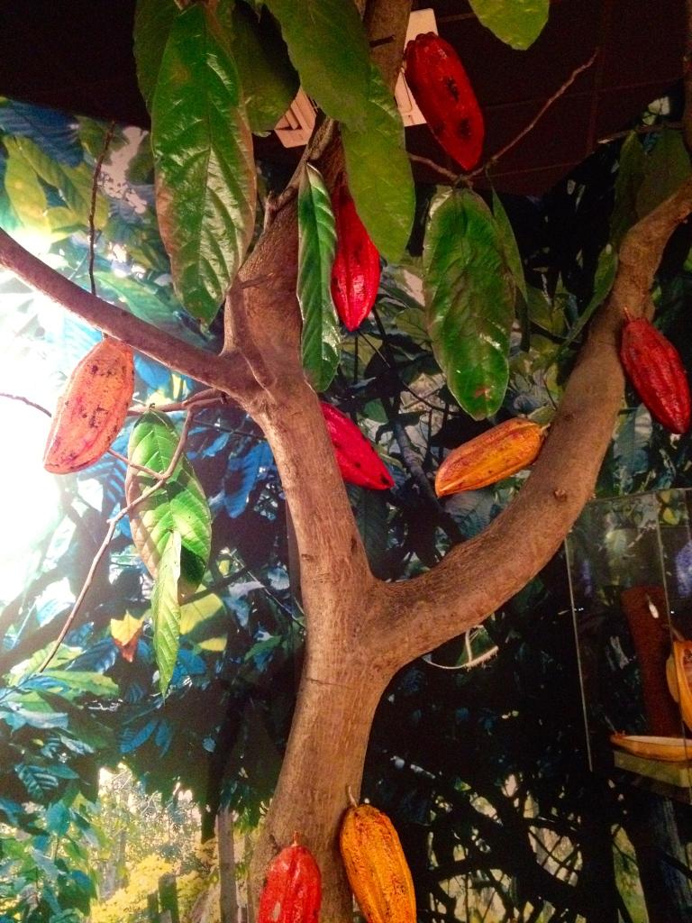 Cacao tree - CHOCOLATE MUSEE